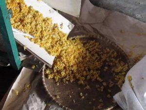 pemipihan jagung